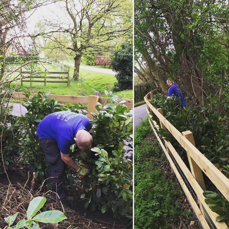 Hedge Planting in Maldon - Miller's Garden Services